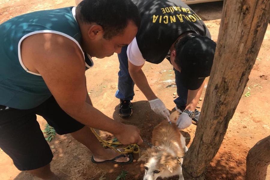 Crato realiza segunda etapa da Campanha de Vacinação Antirrábica de cães e gatos 2018