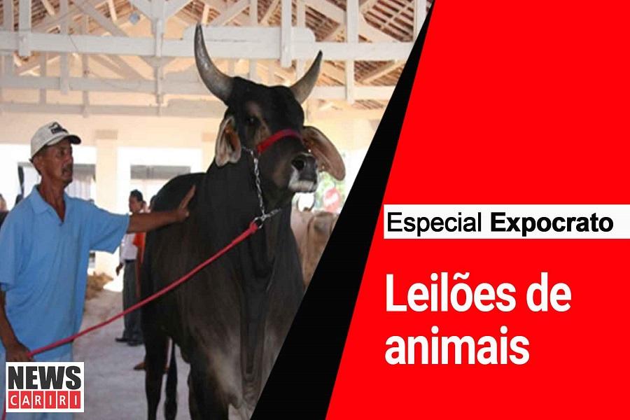 ESPECIAL EXPOCRATO: Expocrato 75 anos - Exposição de animais