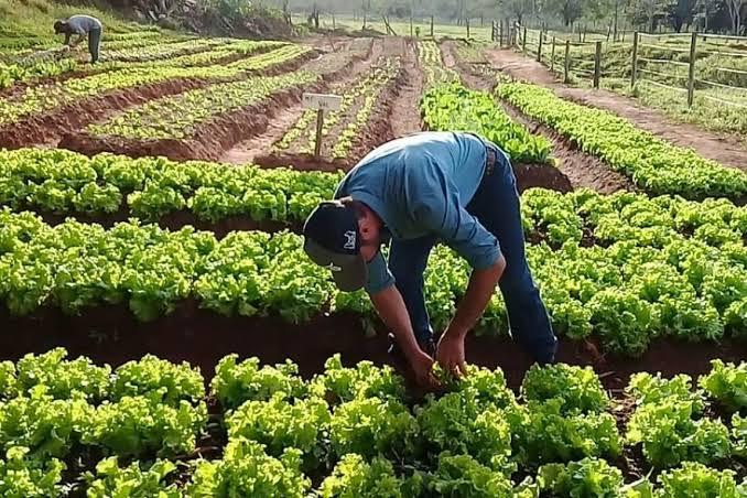 Resultado de imagem para Agroamigo supera marca de R$ 2 bilhões