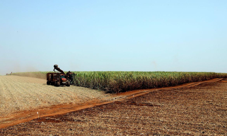plantacao_de_soja_soja_agricultura1103209901